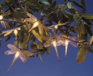 libelulas-luminosas2-300x243